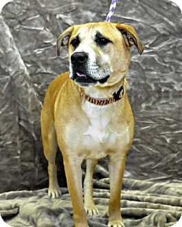 Shepherd (Unknown Type) Mix Dog for adoption in Yreka, California - Zeus