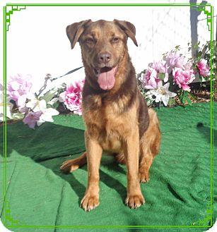 Hound (Unknown Type) Mix Dog for adoption in Marietta, Georgia - CLIFFORD