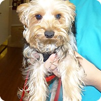 Adopt A Pet :: Dolly - Conroe, TX