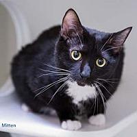 Adopt A Pet :: Mitten - Merrifield, VA
