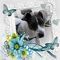 Adopt A Pet :: Izzie - Crowley, LA