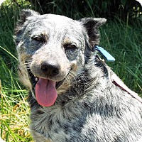 Adopt A Pet :: Spud - Grants Pass, OR