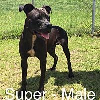 Adopt A Pet :: Super - Waycross, GA