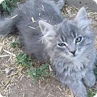 Adopt A Pet :: Eleanor - Buhl, ID