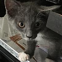 Adopt A Pet :: Zado - Covington, KY