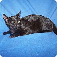 Adopt A Pet :: K-Jenny1-Jenner - Colorado Springs, CO