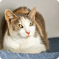 Adopt A Pet :: Chelsea - Coronado, CA