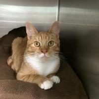 Adopt A Pet :: Ronnie - BATH, NY