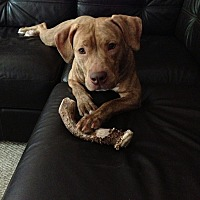 Adopt A Pet :: Meisha (COURTESY POST) - Baltimore, MD