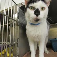 Adopt A Pet :: Aiden - Munster, IN