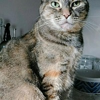 Adopt A Pet :: Millie - Blaine, MN
