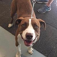 Adopt A Pet :: Karma - Crocker, MO