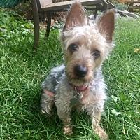Adopt A Pet :: SASHA - Linden, NJ