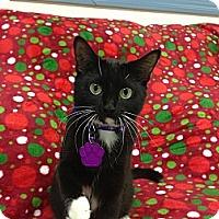 Adopt A Pet :: Paisley - Aiken, SC