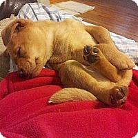 Adopt A Pet :: Hemingway - New Boston, NH