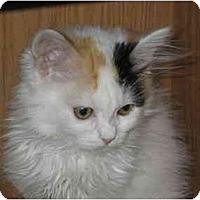 Adopt A Pet :: Ramona - Davis, CA