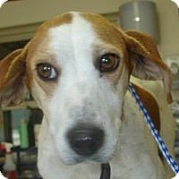 Adopt A Pet :: Jenny - Stilwell, OK