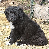Adopt A Pet :: Dexter - PENDING, in Maine - kennebunkport, ME