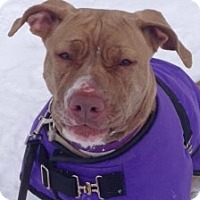 Adopt A Pet :: Carly - Medford, MA