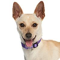 Adopt A Pet :: Jerome - Burbank, CA