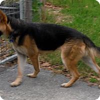 Adopt A Pet :: MADOX - SAN ANTONIO, TX
