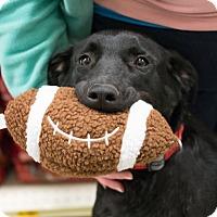 Adopt A Pet :: Lexus - Seattle, WA