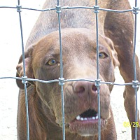 Adopt A Pet :: Bentley - Mexia, TX