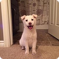 Adopt A Pet :: Pearl - Saskatoon, SK