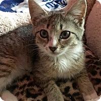 Adopt A Pet :: Cateron Diaz - Schertz, TX