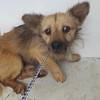 Adopt A Pet :: Laddie - Fresno CA, CA