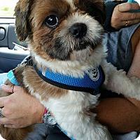Adopt A Pet :: Bindae Korea - Urbana, OH
