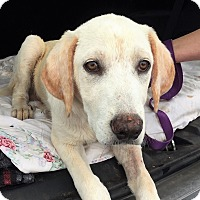 Adopt A Pet :: Argo - Kyle, TX