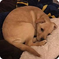 Adopt A Pet :: Annabelle - North Brunswick, NJ
