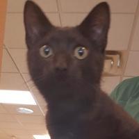 Adopt A Pet :: Shep - Mesquite, TX