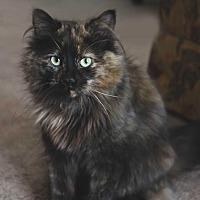 Adopt A Pet :: Willowbend Arvee - Edmonton, AB