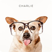 Adopt A Pet :: Charlie - Tomball, TX