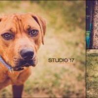 Adopt A Pet :: Mulligan - Burlington, NC