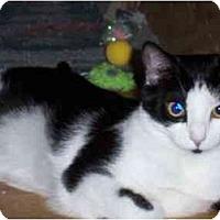 Adopt A Pet :: Lola - Jenkintown, PA