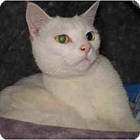 Adopt A Pet :: Charlie - Greenville, SC