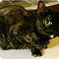Adopt A Pet :: Lucy (PO) - Little Falls, NJ