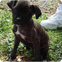 Adopt A Pet :: Jacobi - Plainfield, CT