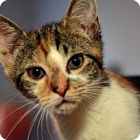 Adopt A Pet :: Rhonda Walker - Brooklyn, NY