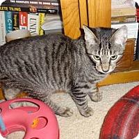 Adopt A Pet :: Riley - Colmar, PA