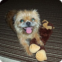 Adopt A Pet :: Sofie ~ Adoption Pending - Youngstown, OH