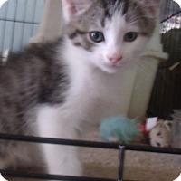 Adopt A Pet :: QUINCY - Acme, PA