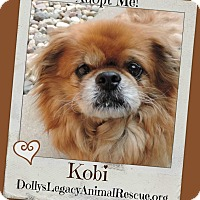 Adopt A Pet :: KOBI - Lincoln, NE