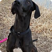 Adopt A Pet :: Bonnie - Stevens Point, WI