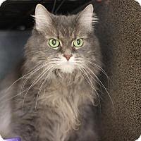 Adopt A Pet :: Lola - NO FEE - Midland, MI