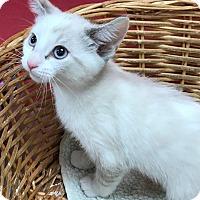 Adopt A Pet :: Maria - Decatur, AL