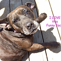 Adopt A Pet :: Henrietta - Poway, CA